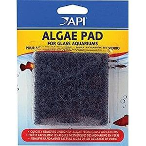 API algae pad at Marine Fish Shop