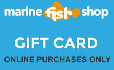 Gift Card Gift Vouchers