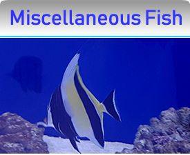 Miscellaneous Fish