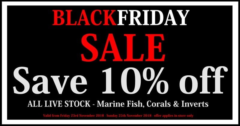 black friday marine fish sale