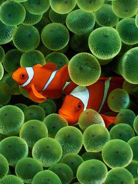 aquarium marine food brands