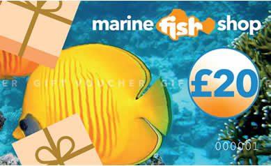 Marine Fish Shop Gift Voucher £20.00 Gift Vouchers